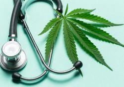 Le cannabis thérapeutique, en avez-vous déjà entendu parler ?